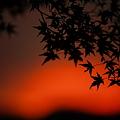 『暮れ行く紅。。。』 ~岐阜県 郡上八幡城~
