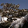 雪化粧の金閣寺_4