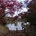 写真: 菖蒲の墓場