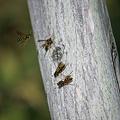 Photos: bee10092011sd15