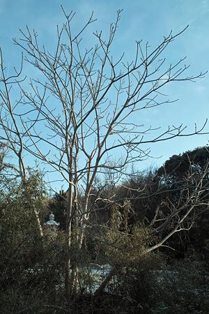 Tree02282012dp2