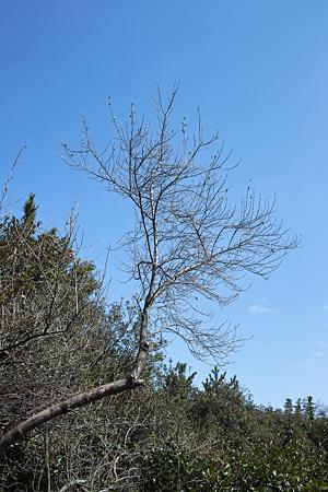 tree03262012dp2-01
