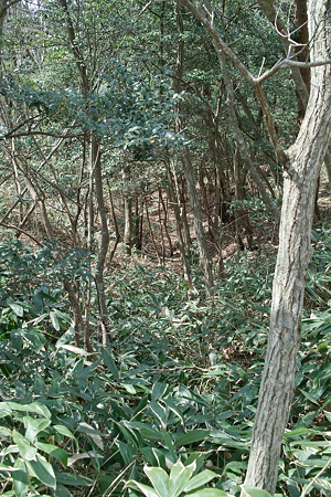 trees04062012dp2-02