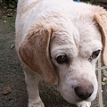 うちの愛犬ジャッキーをシャ...