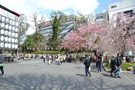 さくらまつり!@上野公園[4/4]