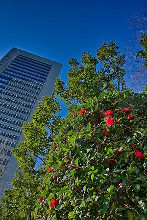 花木と摩天楼SDIM0089