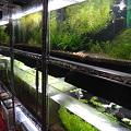 Photos: 特別水槽4