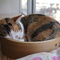 Photos: セイロ猫