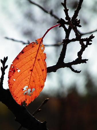 彩の森 089