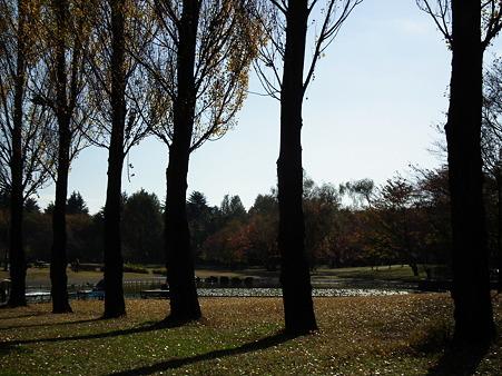 彩の森 008