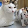 Photos: 仔猫も大きくなりました(^^)