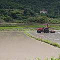 Photos: 石垣島の田植えP1100030