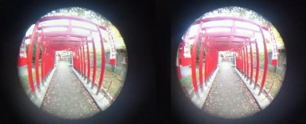 写真: 3D魚眼鳥居
