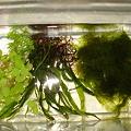 20111017 水草プレゼント
