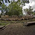 Photos: northsafari110705080