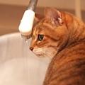 最近のお風呂事情?