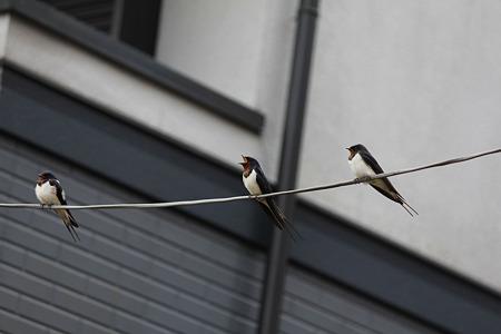 3羽並んで