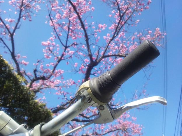 桜とチャリンコ3