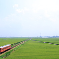 Photos: 水田地帯を行くキハ100形気動車