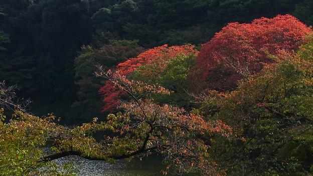 小石川後楽園の紅葉2011