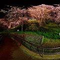 2012年4月6日 船越堤公園 夜桜 360度パノラマ写真
