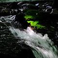 Photos: 真夏の森で^^