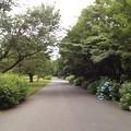写真: 120615 小山内裏公園