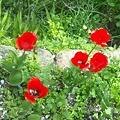 高取山の四季の花