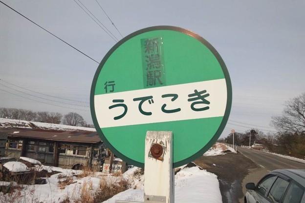 Photos: うでこき?