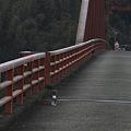 Photos: 天狗橋に猫が2匹居ました