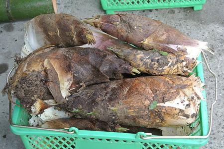 発送用竹の子収穫