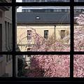 写真: 京都府庁・旧本館17