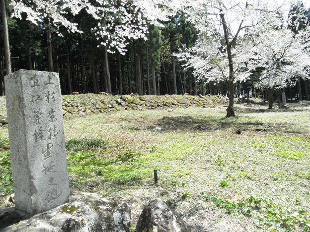 兼続さん誕生碑近くのカタクリ