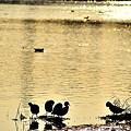 水辺の集い