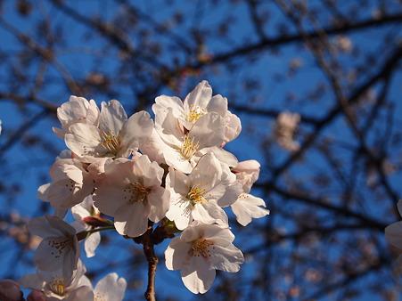 青空と桜と私