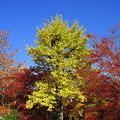 京都2007.常寂光寺6