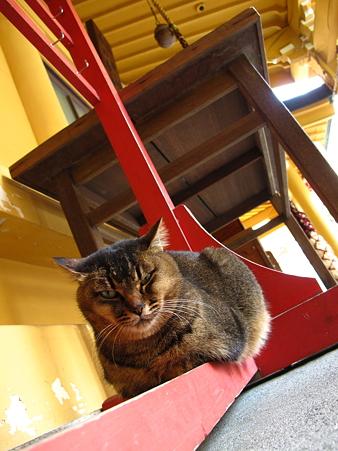 小梳(おぐし)神社の猫2