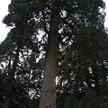 写真: 20120103_152758_01-raw