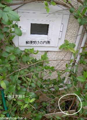 郵便受け内側&電気のメインスイッチ