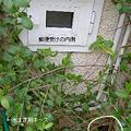Photos: 郵便受け内側&電気のメインスイッチ