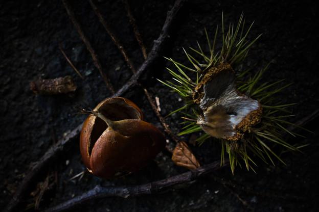 初秋の抜け殻