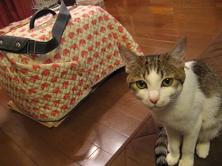 猫用キャリーケースカバー作ってみました。