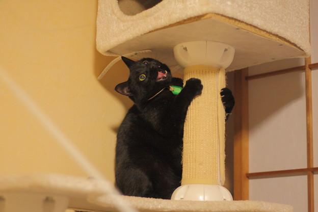 写真: 遊んでいたら面白い顔になった