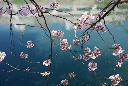 2012.04.09 大岡川桜のプロムナード 川面
