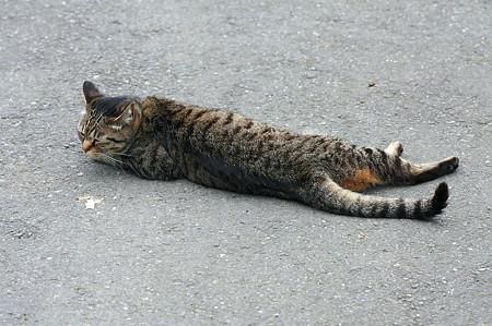 2011.06.20 和泉川 道路に猫