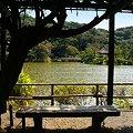 Photos: 大池・・