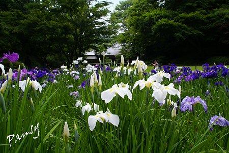 明月院後庭園・・3