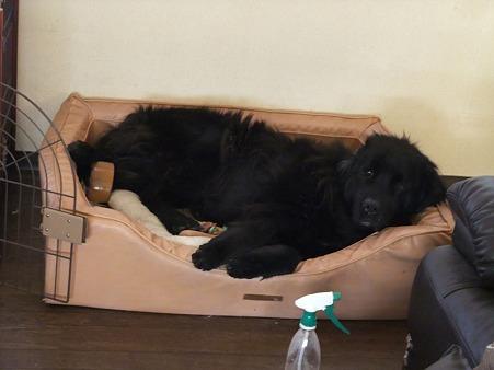ぴったりサイズのベッド