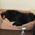 Photos: ぴったりサイズのベッド