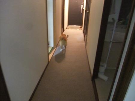 こっちは玄関か